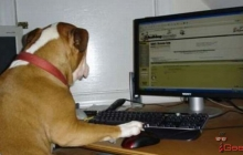 Собаки смогут сами публиковать свои фото в соцсетях