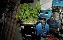 На МКС вырастили здоровые растения