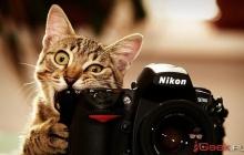 Как заработать деньги в Интернете на видео и фотографиях?