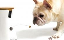 Furbo позволит поговорить с собакой по телефону