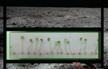 NASA посадит растения на Луне