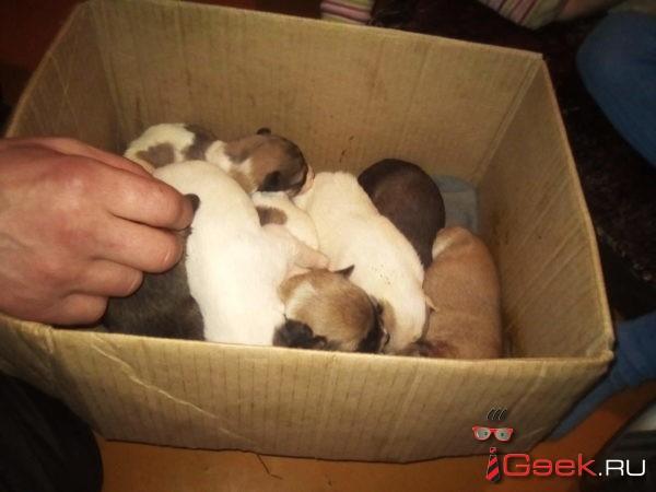 Открываем год Собаки: благотворительный сбор для приюта «Лапа помощи»