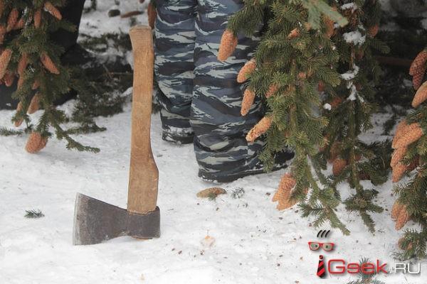 Серовчане к Новому Году вырубили 575 елей и сосен