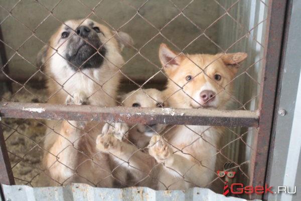 В Серове определили компанию, которая займется отловом и содержанием бездомных животных