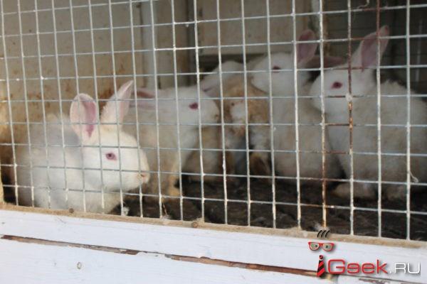 Развели как кроликов?.. Серовский кроликовод перестает верить в реальную поддержку фермерства