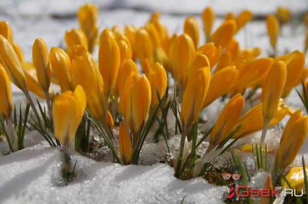 Снег в Свердловской области растает не раньше конца апреля