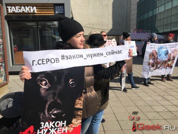 Серовские зоозащитники будут сотрудничать с представителями московской организации в сфере защиты животных