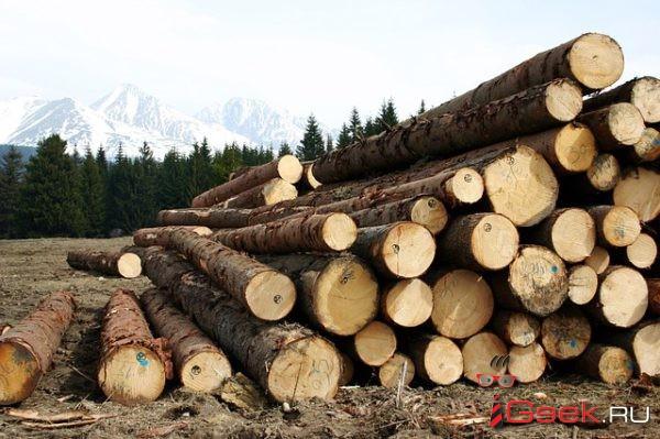 Серовского лесничего будут судить за незаконные рубки