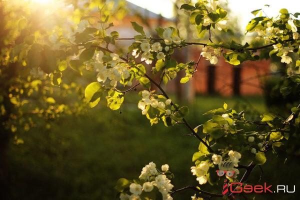 На Урал все-таки придет весна. Осталось потерпеть несколько дней