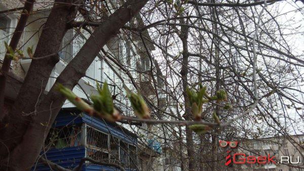 15 мая – Единый фенологический день. Дружно фотографируем черемуху