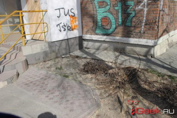 Серовчане вызвали полицию из-за спиленной яблони. Жители дома посадили дерево больше 50 лет назад