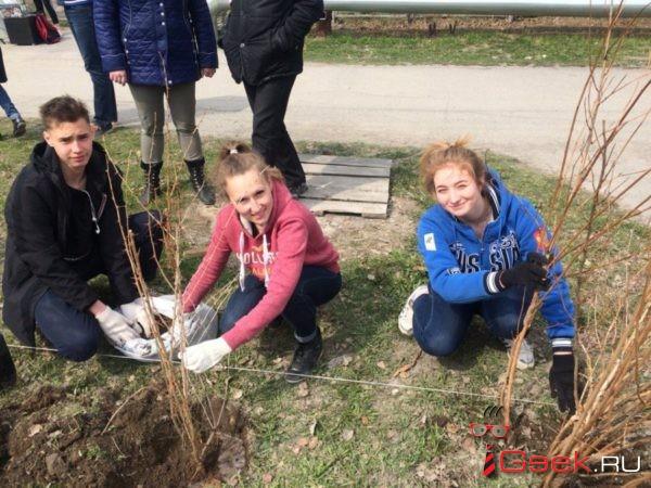 Серов принял участие во Всероссийском дне посадки леса