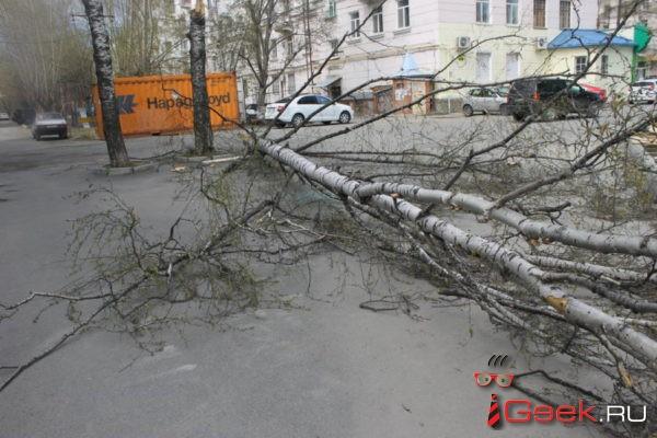 Серовчанка, на машину которой вчера упало дерево, будет взыскивать ущерб через суд? «Чья это береза — неизвестно»