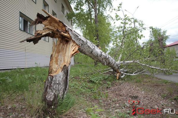 На Средний Урал вновь надвигаются заморозки и сильный ветер