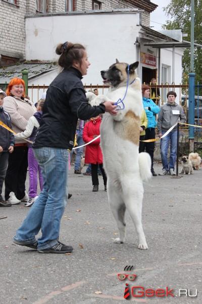 В Серове пройдет выставка собак «Элита северного Урала»
