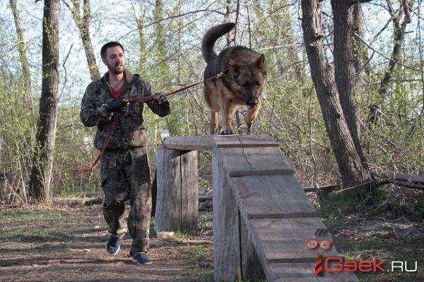 Администрация Серова прокомментировала ситуацию с инициативой строительства площадки для выгула собак