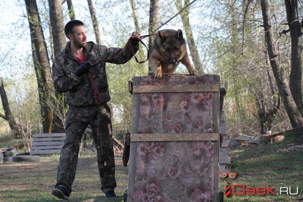 Серовчане за свой счет готовы построить площадку для дрессировки и выгула собак. Местные власти против?..