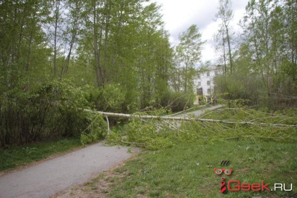 Поселок Красный Яр и село Филькино из-за сильного ветра остались без света. В Серове падают ветви деревьев