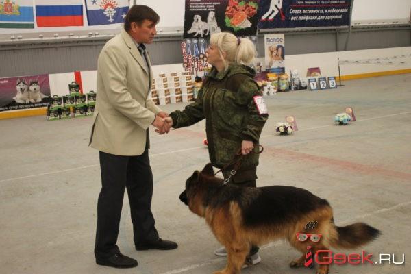 «Это дорогое хобби». В Серове прошла выставка собак «Элита Северного Урала 2018»