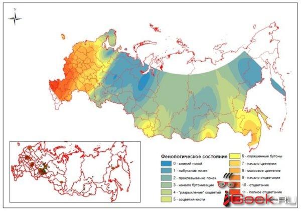 Черемуха в похолодании не виновата. Уральские ученые объясняют: в народной примете причина и следствие перепутаны