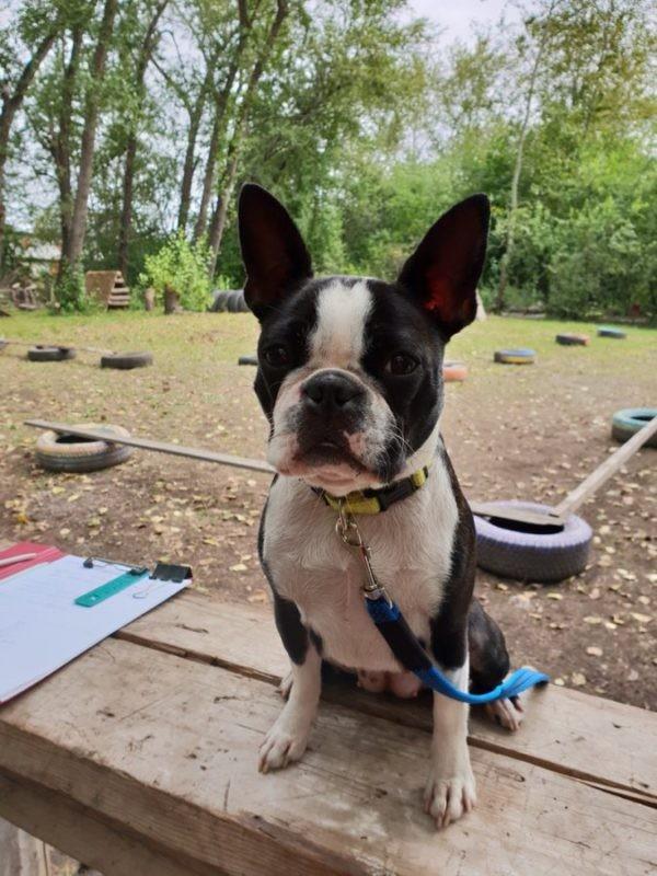 В Серове прошел первый спортивно-развлекательный турнир по послушанию среди собак